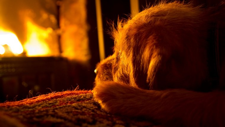Puppy in front of an open fireplace on a winter's evening