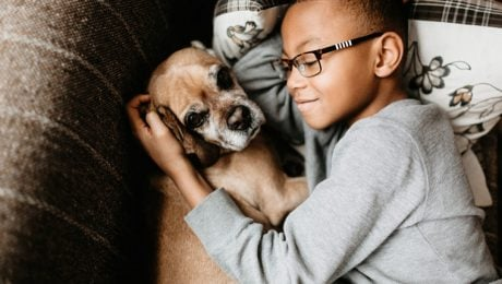 3 Tips For Teaching Your Children To Respect Dogs