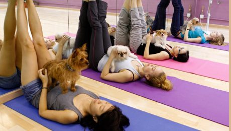 Doga: What Is Dog Yoga? Can Your Dog Do It?