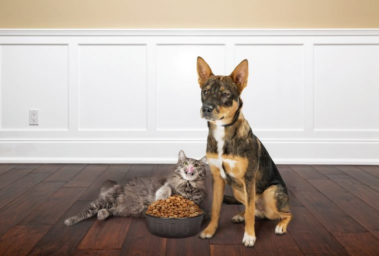 dog and cat with bowl of food