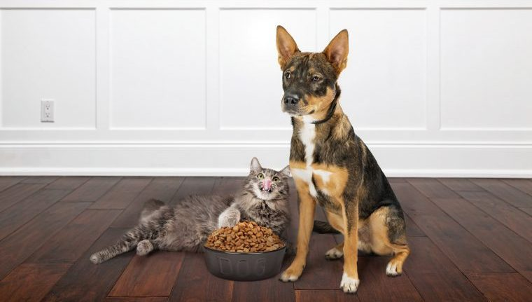 dog and cat with food