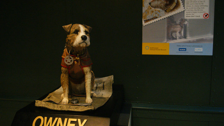 Owney The Post Office Dog