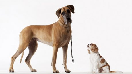 Are Big Dogs Smarter Than Small Dogs? Here's What Research Says