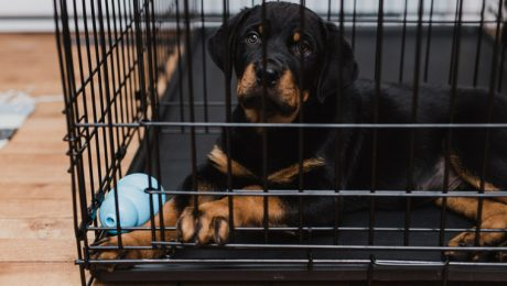 Crate Alternatives For Dogs Who Hate The Crate