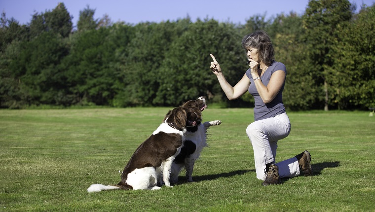 a woman training her two dogs by using a whistle