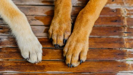 How To Safely Take Paw Prints Of Your Dog's Paws
