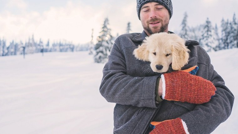 Man holding golden retriever puppy dog in his coat