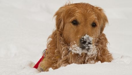 25 Dogs With A Case Of Snowface [PICTURES]