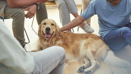 Therapy Dogs Ease Students' Exam Stress In Chicago School