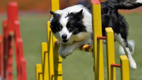 6 Hilarious Dogs Who Didn't Care About Agility Course Rules [VIDEOS]