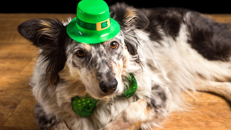 7 Best Dog Breeds To Celebrate With On Saint Patrick's Day ...