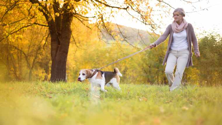 Dog Walking Injuries Rise Among Seniors And Aging Adults