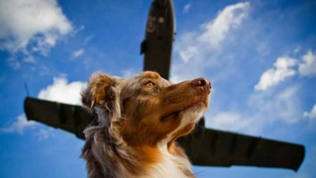 Should You Sedate Your Dog When Traveling By Plane?