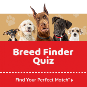 Spot The Difference Puppy Quiz Answers
