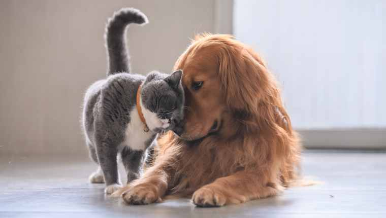 7 Cute Dogs Cuddling With Their Cat Siblings Videos Dogtime