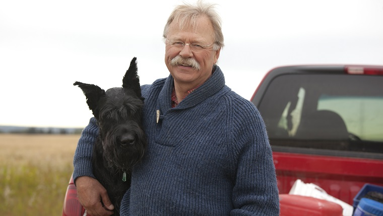 Mature farmer with giant schnauzer sitting on pickup truck with cereal crop in the background.For more farming images...