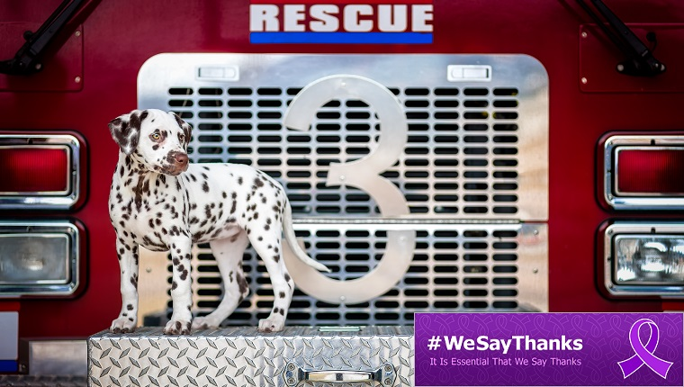 A Dalmatian Puppy sits on the front of a fire truck.