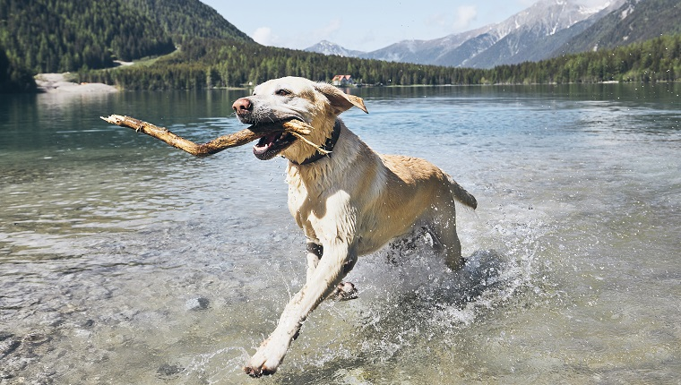 Dog Running In Lake Against Sky