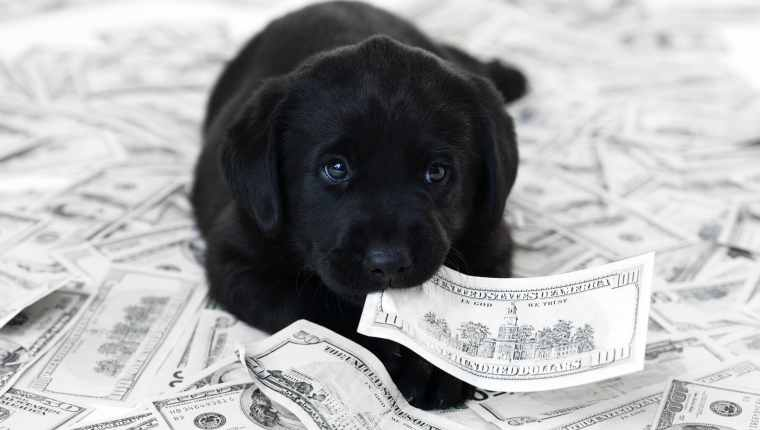 Dog Money