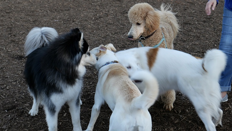 Dogs meeting each other at a southern california dog park
