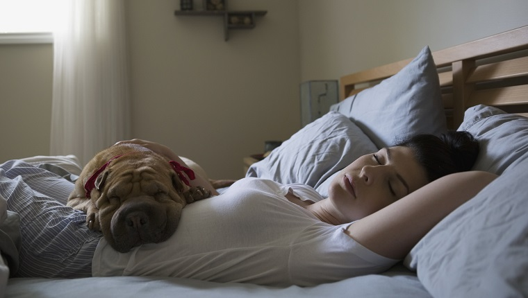 Woman and dog sleeping in bed