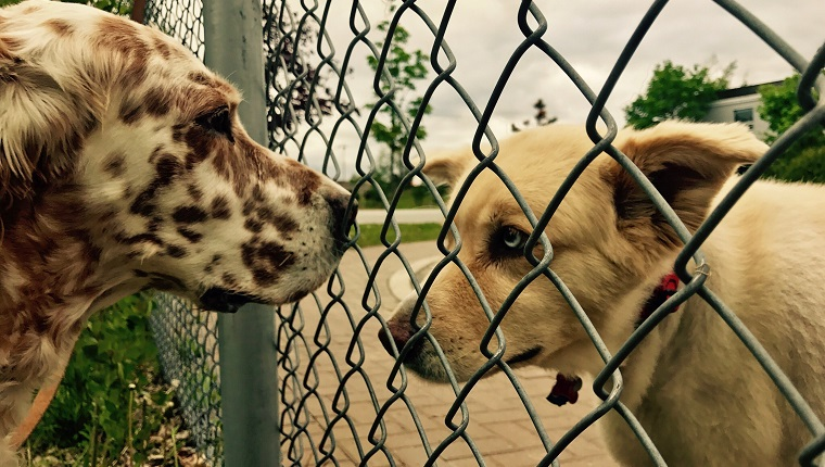 Close-Up Of Dogs By Chainlink Fence
