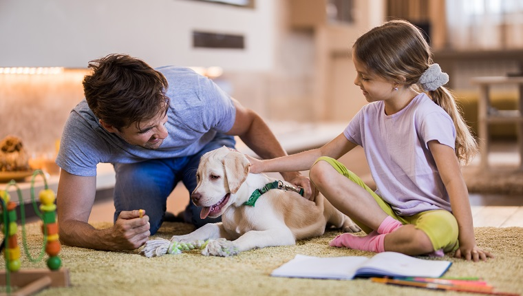 Happy father and daughter spending time with their Labrador puppy in the living room.