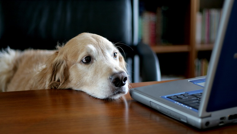 Take Your Dog To Work Day: Guidelines & Alternative Ways To ...