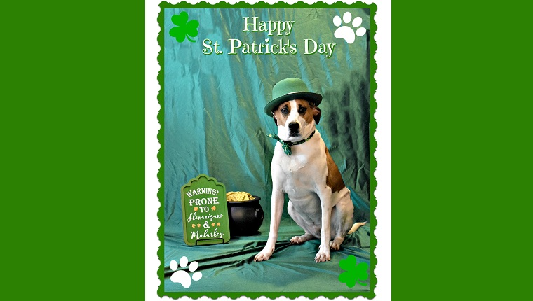 dog posing for saint patrick's day shoot