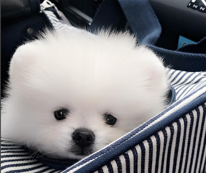 30 Perfect Pomeranian Names Pictures Dogtime