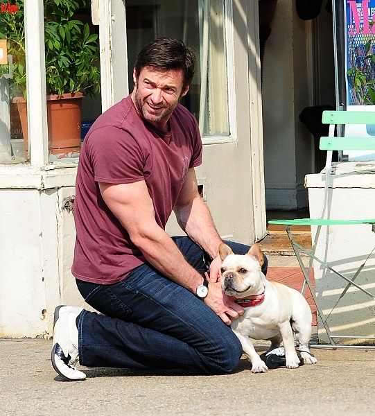 Hugh Jackman Pets His French Bulldog, Dali