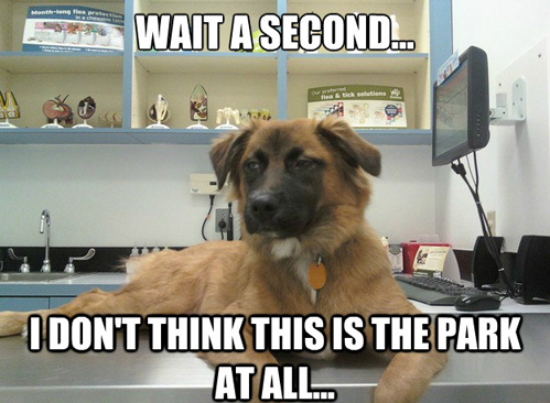 Your vet visits don't need to be stressful with PetPartner
