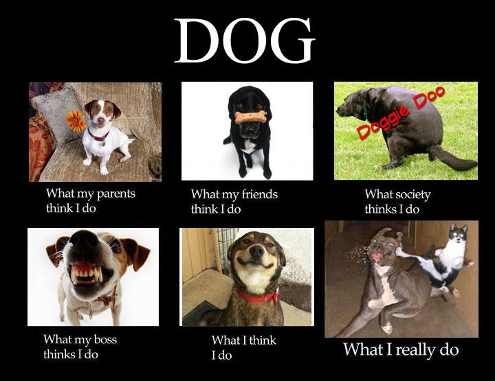 Dog Memes I Don T Think This Is The Park