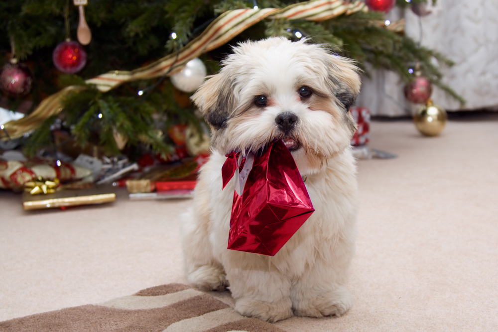 25 Dogs Staying Up All Night To See Santa [PICTURES] - Dogtime