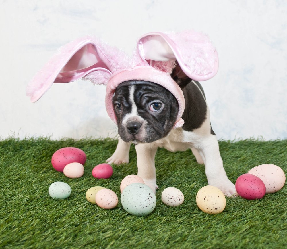 Easter is Sunday and here are 25 dogs who are ready for the occasion ...