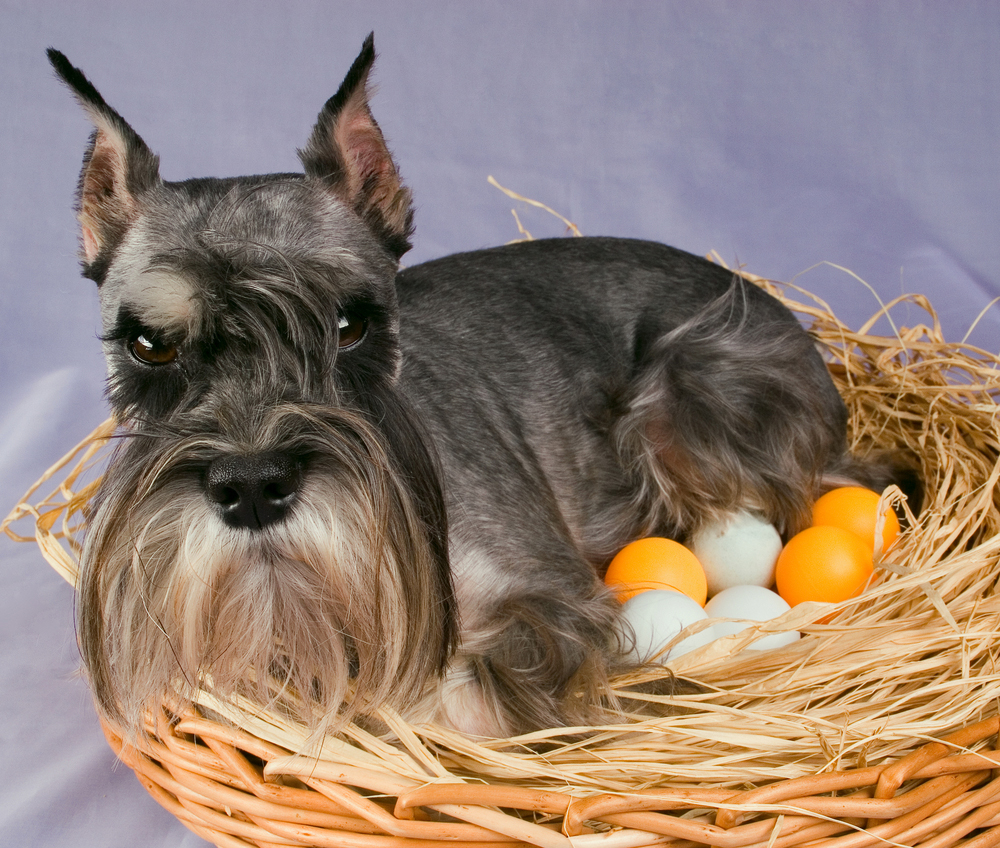25 easter dog pictures to make you smile dogtime 25 easter dog pictures to make you smile negle Image collections