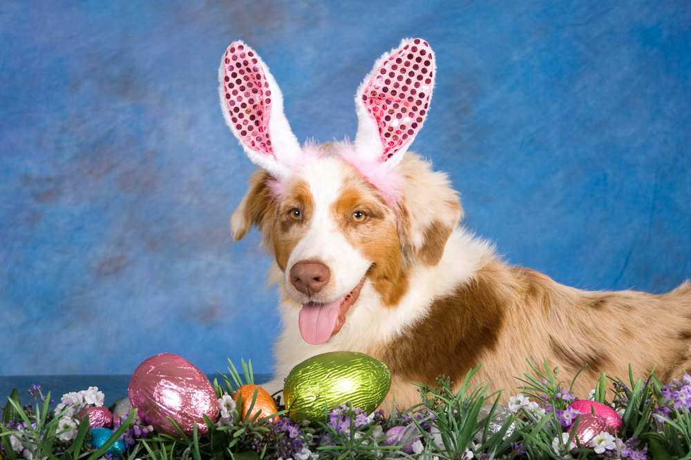 25 Easter Dog Pictures To Make You Smile - Dogtime