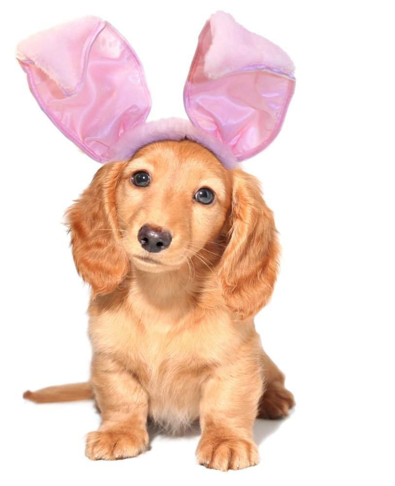25 easter dog pictures to make you smile dogtime