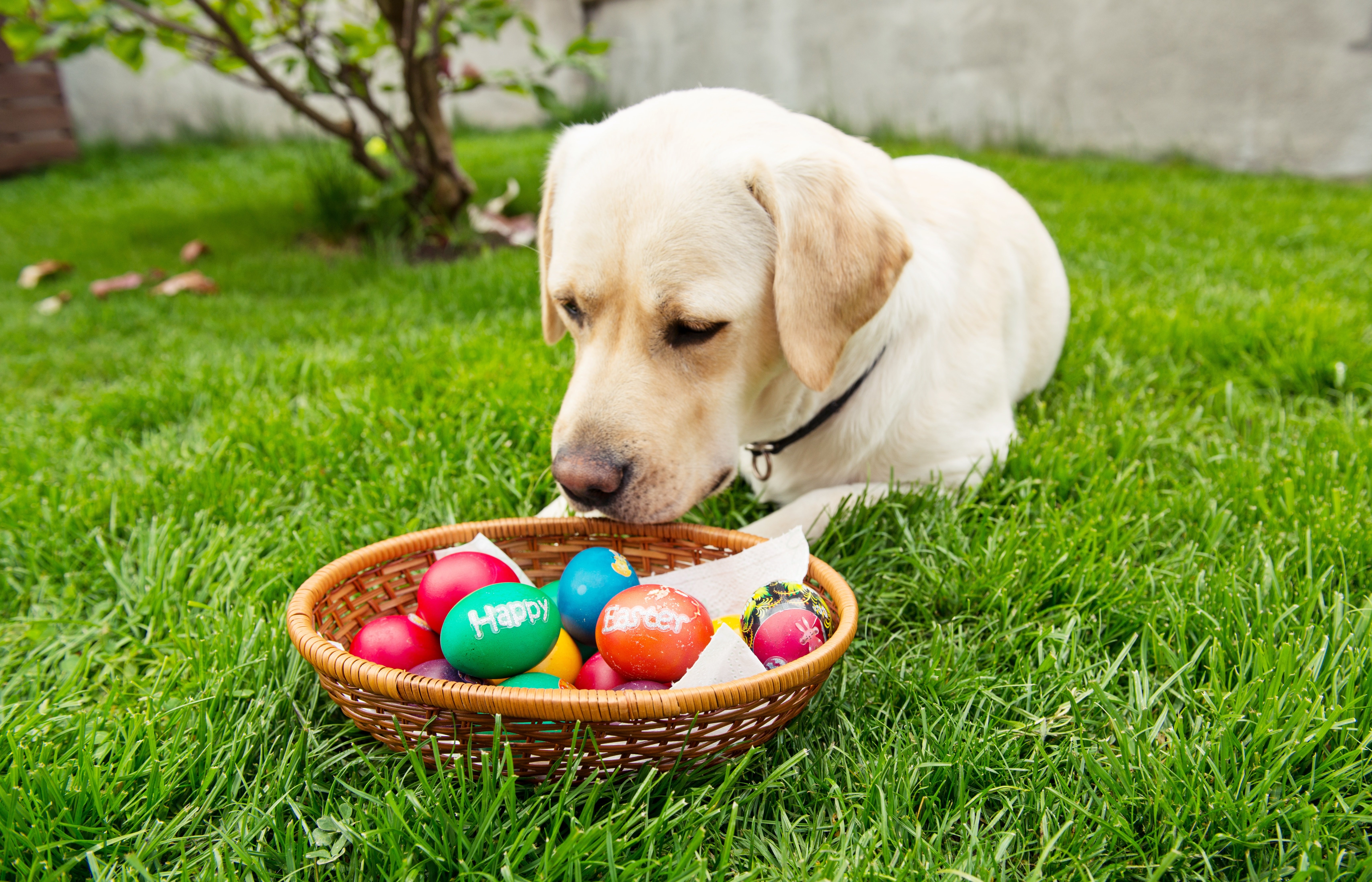 Easter Dog And Puppy Pictures