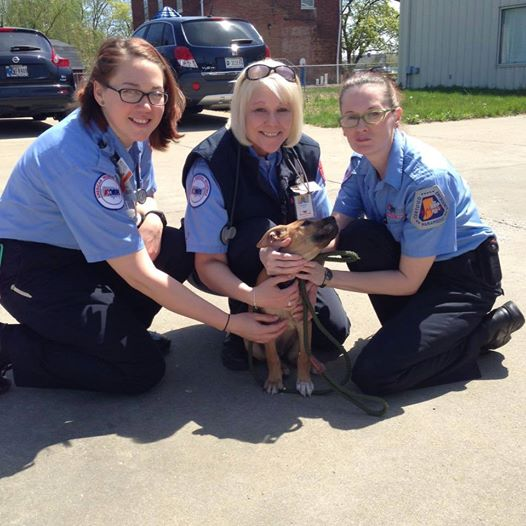 Stray Puppy Chases Down Ambulance And Catches A Forever Home
