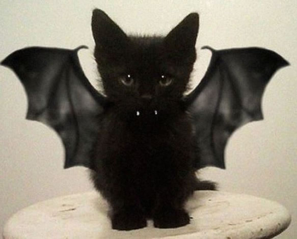 Previous thumbs & 30 Awesome Dog And Cat Halloween Costumes - Dogtime
