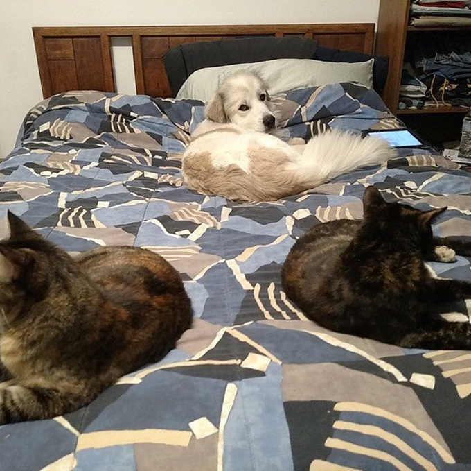 38 Dog Bed Hogs Photo Gallery Dogtime