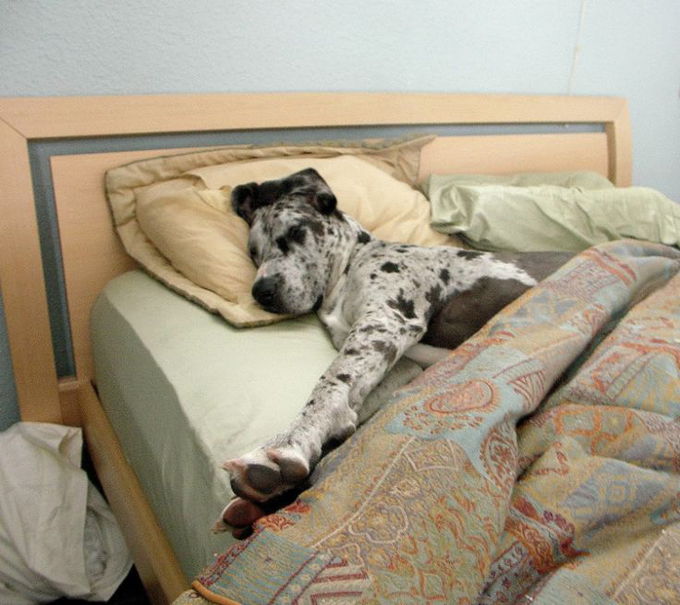 38 dog bed hogs [photo gallery] - dogtime