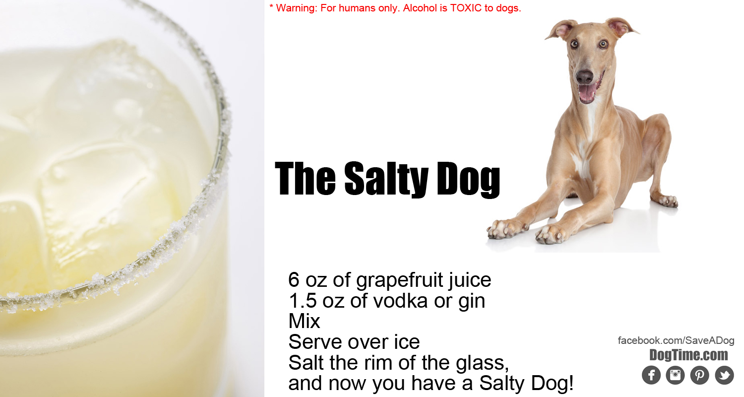What Breed Is Salty Dog