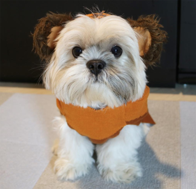 40 Dogs Dressed As Ewoks Pictures Dogtime