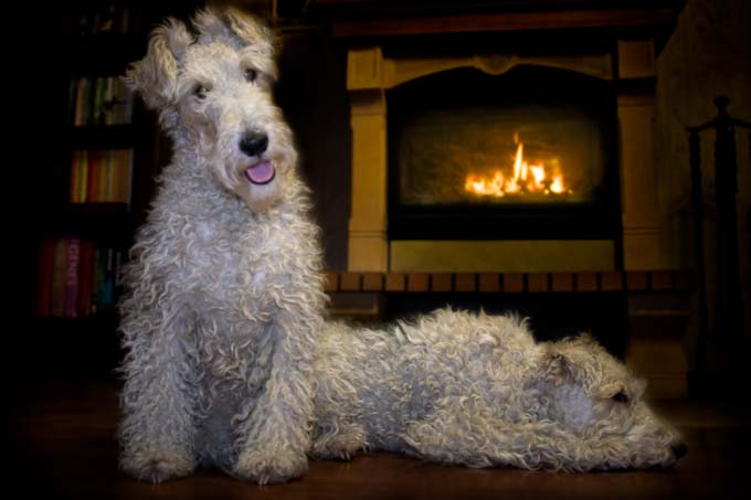 Adorable Dogs Warming Themselves By The Fire [PICTURE GALLERY ...