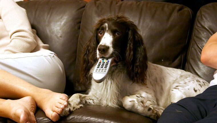 Curl Up And Watch A Dog Movie