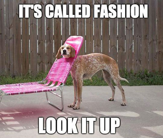 it_s called fashion look it up funny dog memes 25 funny dog memes dogtime,Dog Funny Meme