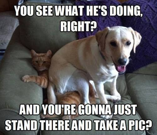 you-see-what-he_s-doing-right-and-youre-gonna-just-stand-there-and-take-a-pic-funny-dog-memes.jpg