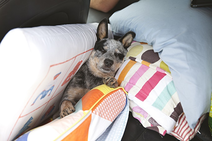 I'm the king of the pillows!